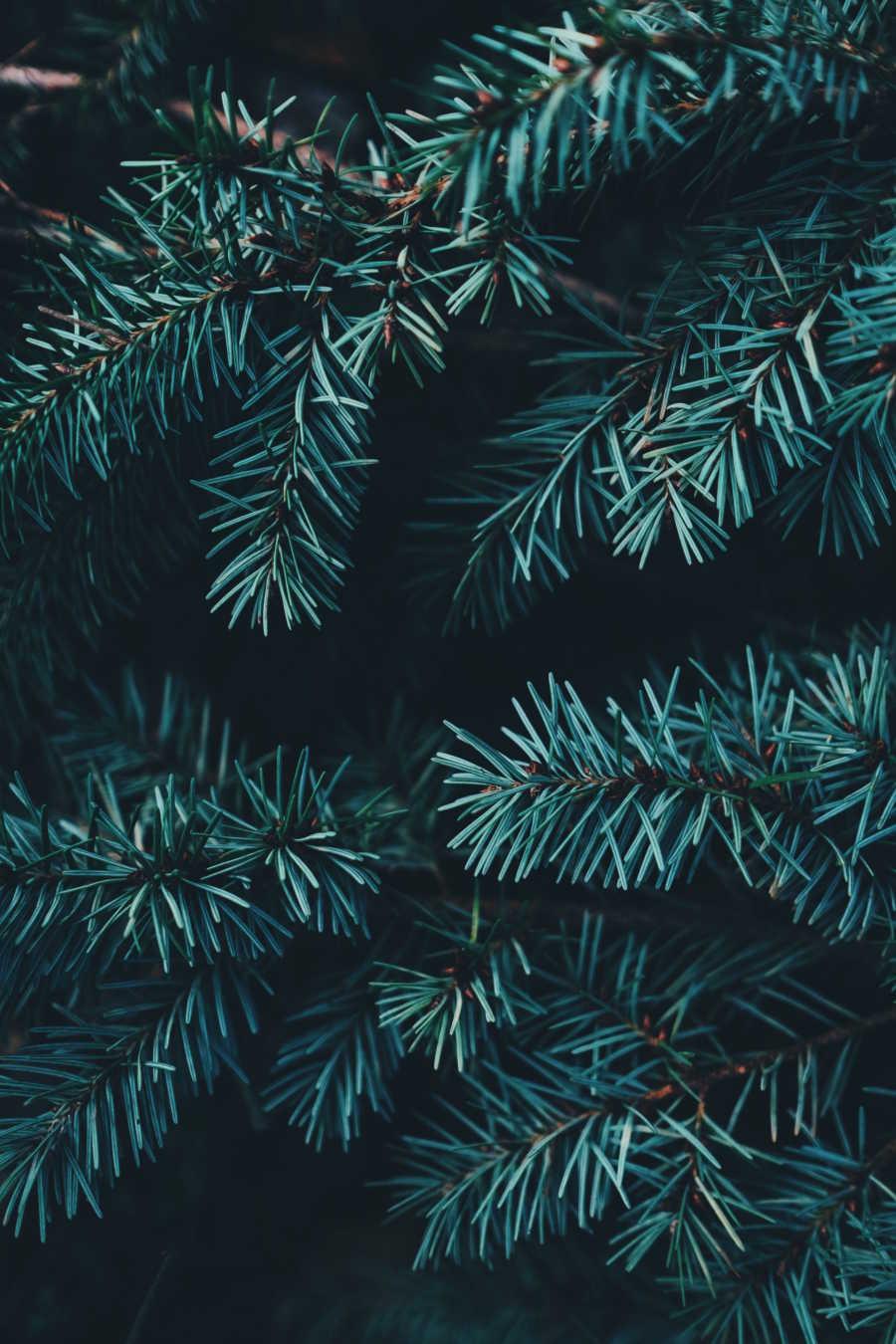 L'échoppe Végétale - Inspirations pour un automne pas monotone | observer la nature et les aiguilles de sapin avant de passer un Noël écolo