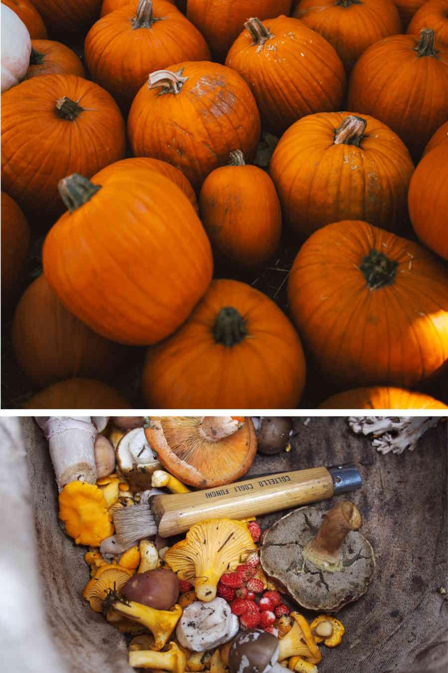 L'échoppe Végétale - Inspirations pour un automne pas monotone | les légumes d'automne comme les courges potimarron et champignons sont de saison