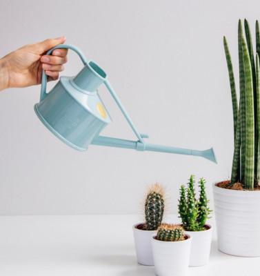 arrosoir plantes d'intérieur en plastique recyclable - bleuet | l'échoppe végétale