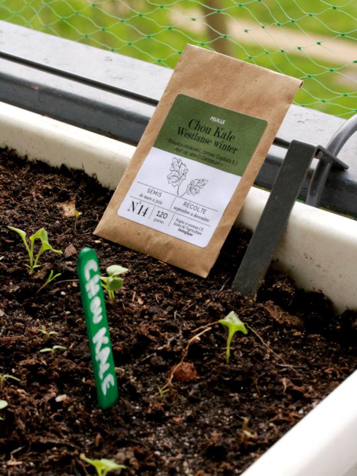 sachet kraft recyclable de graines de chou kale bios et reproductibles
