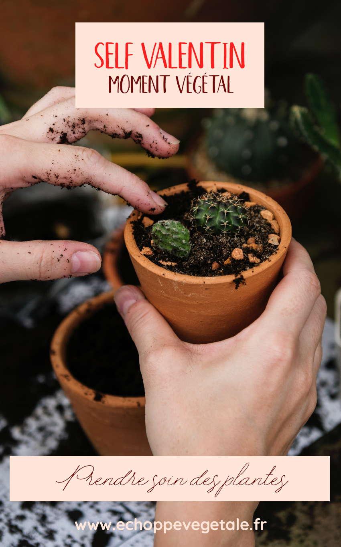 self-valentin pour s'aimer : jardiner et prendre soin des plantes pour une saint-valentin éco-responsable et zéro déchet | échoppe végétale