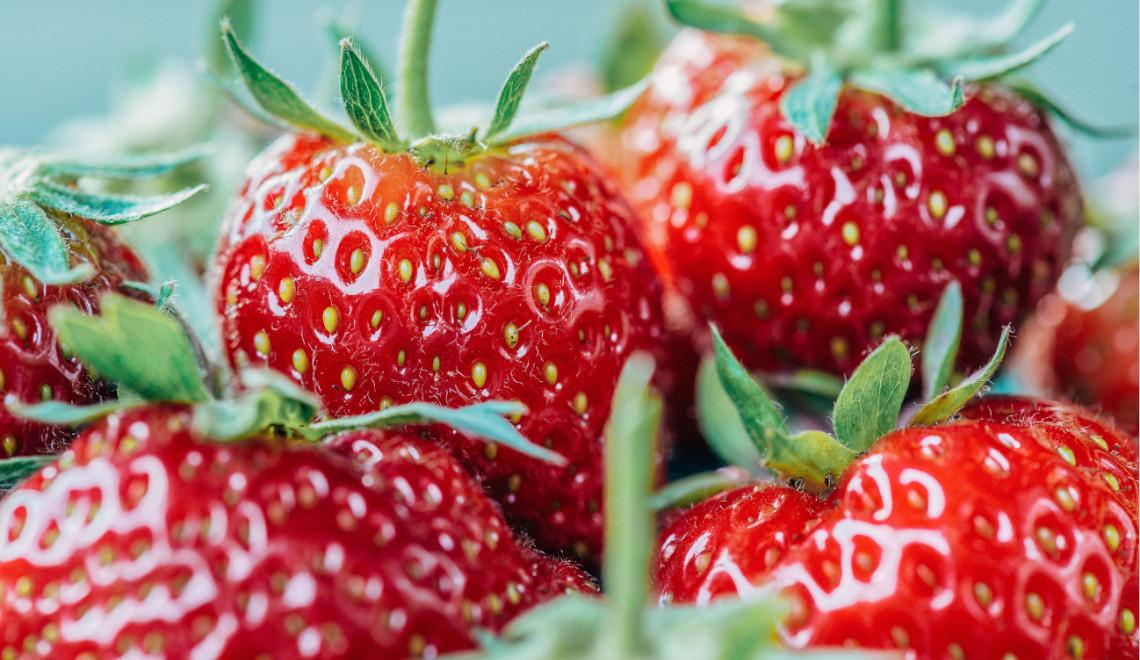Cultiver des fraises sur le balcon : conseils de culture, variétés et plantation