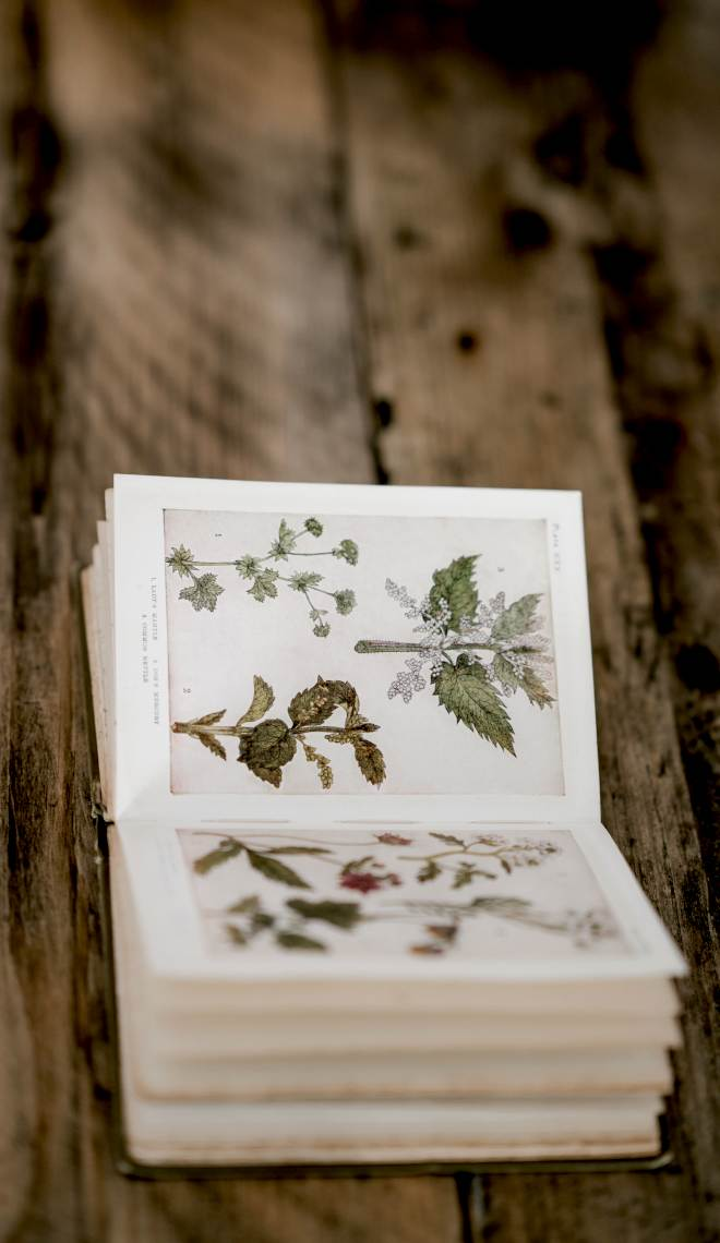 livre herbier ouvert avec fleurs séchées sur table en bois